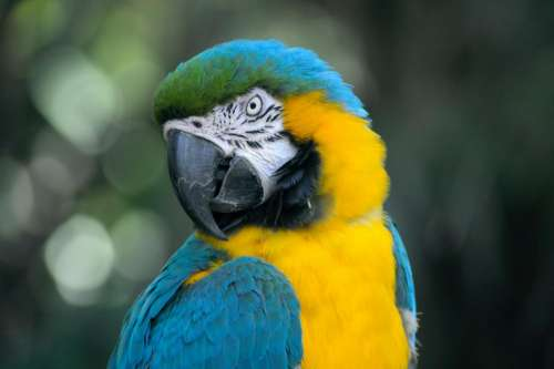 bird beak feather animal fly