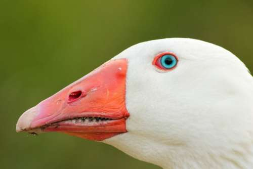 bird animal beak eyes feather