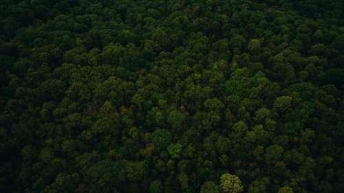 green leaf trees plant nature