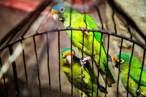 green birds animal pet cage