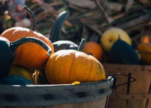 pumpkins basket halloween fall autumn