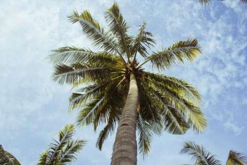 palm trees blue sky clouds sunshine