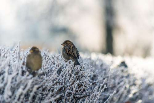 snow winter bird animal bokeh