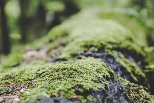 green grass blur nature outdoor