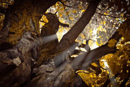 nature tree plant sun rays sunshine