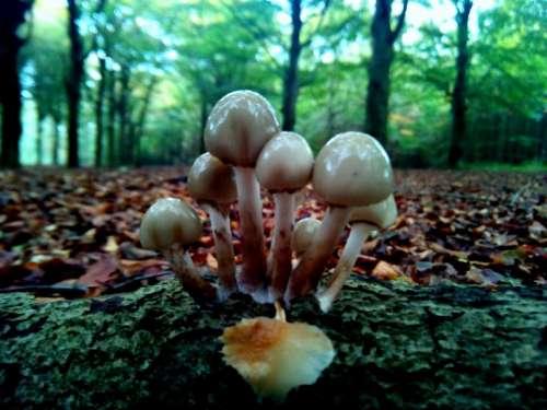 leaf fall mushroom fungus outdoor
