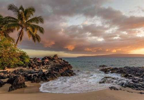 coconut palm tree plant rocks