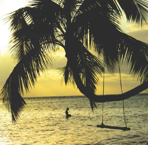 palm trees swing ocean sea water