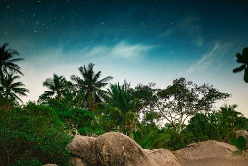 night trees stars jungle tropical