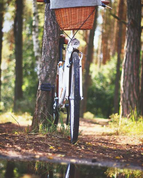 bicycle adventure forest basket bike
