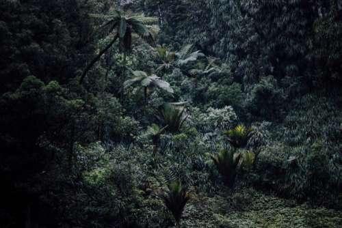green trees plants nature landscape