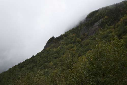 fog mountain trees climate weather