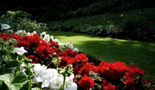 flowers garden lawn sunlight summer