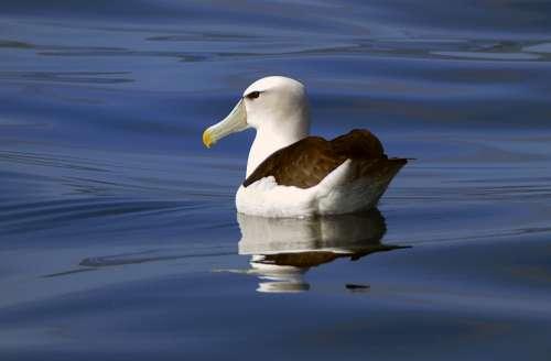 bird swimming wildlife nature outdoors