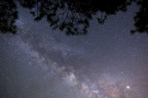 tree night starry sky milky way