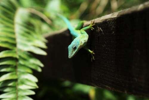 animals reptiles lizard gecko tree