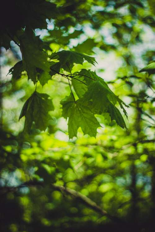 green leaf tree plant nature