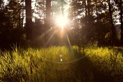sun rays grass nature outdoors forest