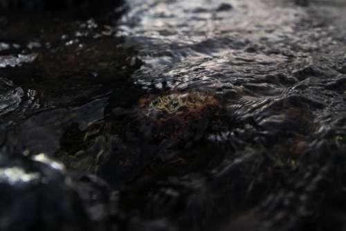river water liquid aqua rocks