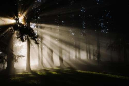 sunrise dawn sunlight trees forest