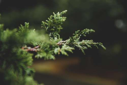 nature trees branches leaves bokeh