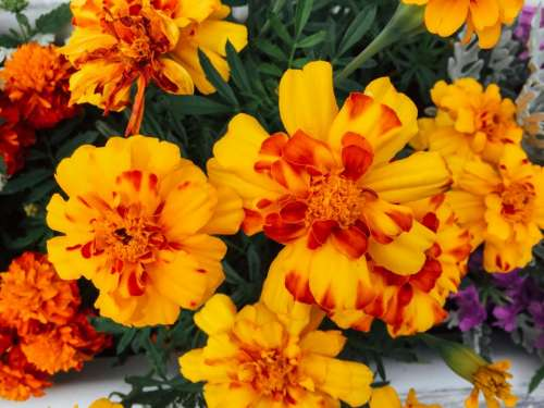 flowers nature blossoms leaves bouquet