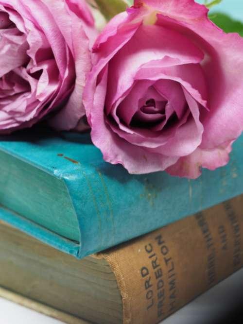 antique books roses pink roses vintage