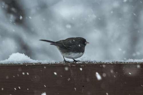 bird animal wood snow winter