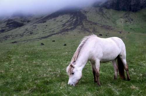 animals horses beautiful mane white