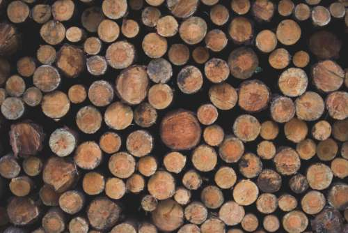 large chopped logs wood forest