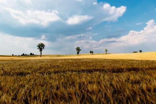 green grass crops agriculture farm