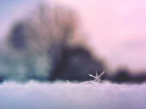 snowflake ice snow winter cold