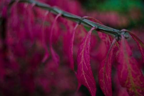 leaf stem plant nature pink
