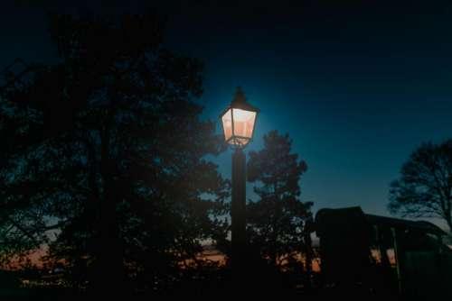 pole lamp outside trees plant