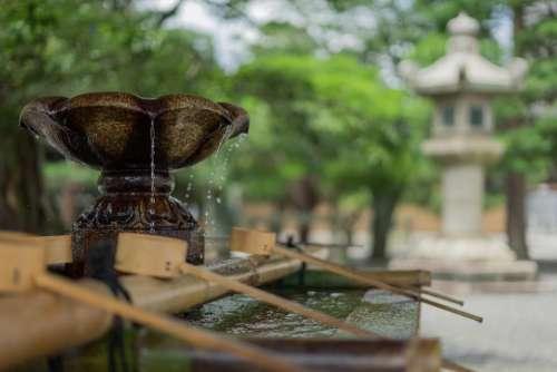 water fountain tree plant blur