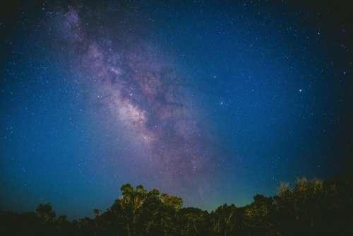 trees sky blue dark stars