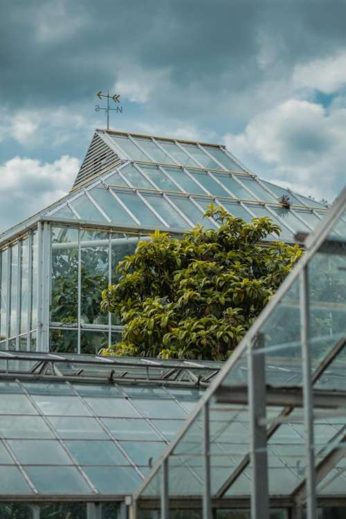 greenhouse plants nature structure glass