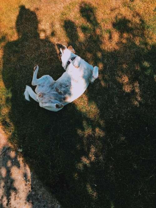 dog rolling sun shadow pet