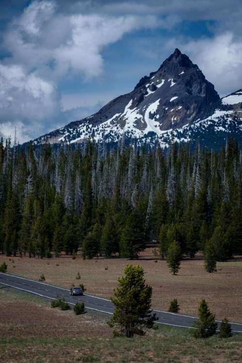 mountain view landscape pine trees