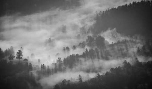 nature trees forest fog smoke