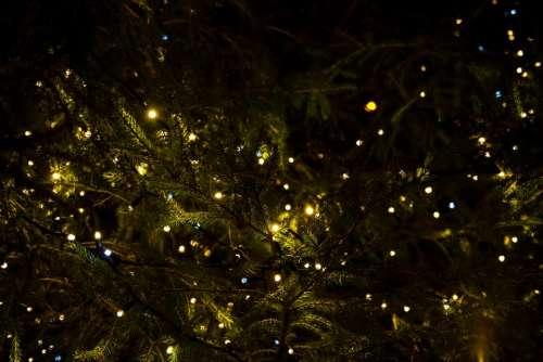 christmas lights tree decor night