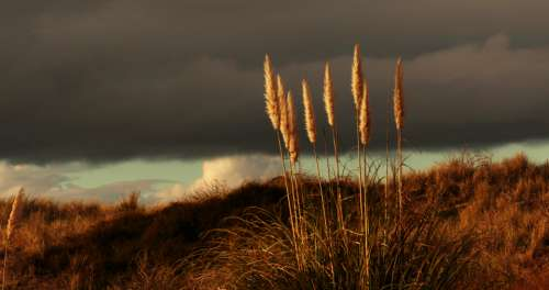 dark sky grass moody gloomy
