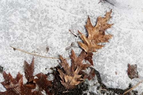 ice snow ground leaves winter
