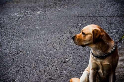 dog animal pet puppy street