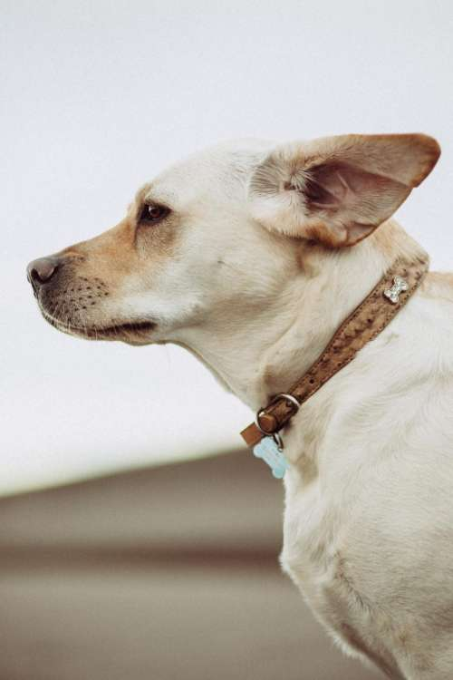 white dog animal friend pet