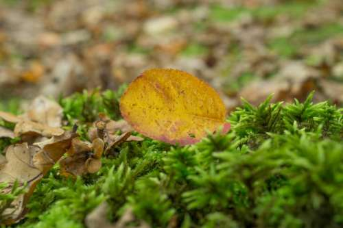 leaf grass plants nature ground