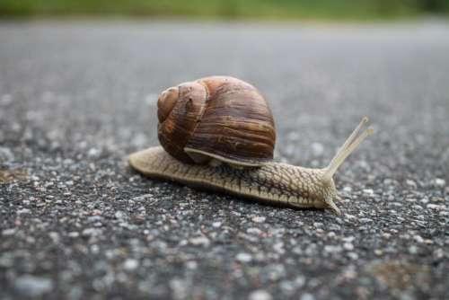 snail nature floor rock slow