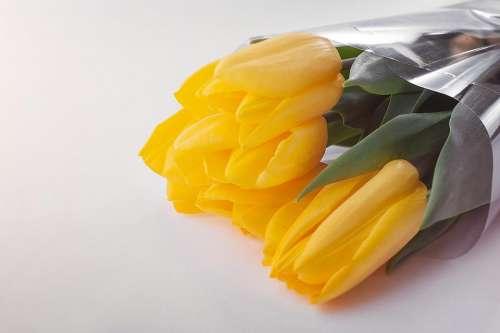 yellow petal flower bouquet tulip