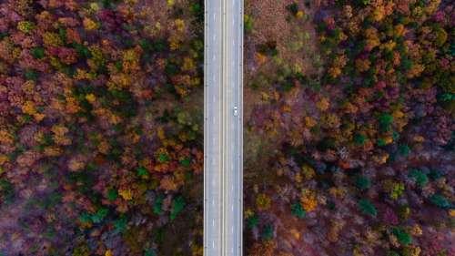 aerial view trees plants fall