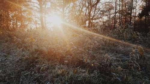 sunshine sunlight sun rays plants trees